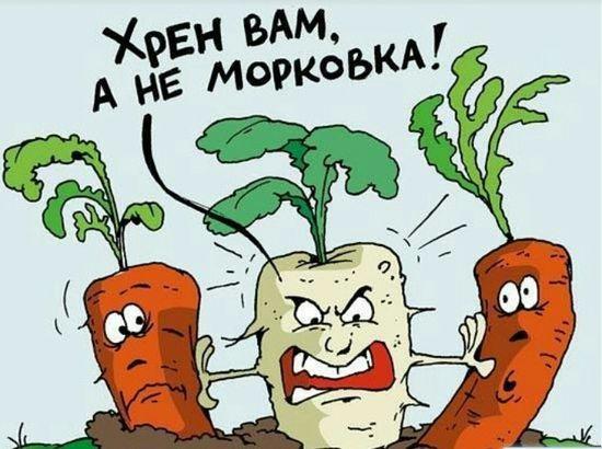 Вкусный корень хрена для похудения