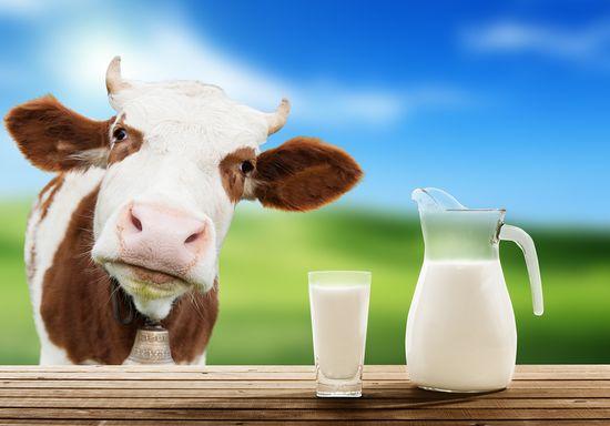 Каши на молоке для похудения. Рецепты