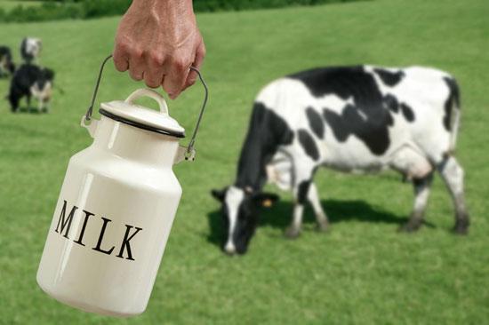 Растительные жиры в молочных продуктах