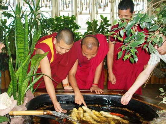 Тибетский сбор трав для похудения