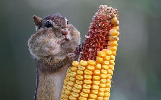 Кукурузная каша для похудения. Вкусно и питательно