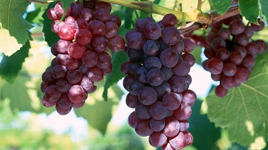 Бесплатный диетолог виноград. Виноградная диета